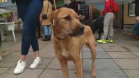 """В търсене на собственици: Показват в """"Капана"""" бездомни кучета от общинския приют в Пловдив"""